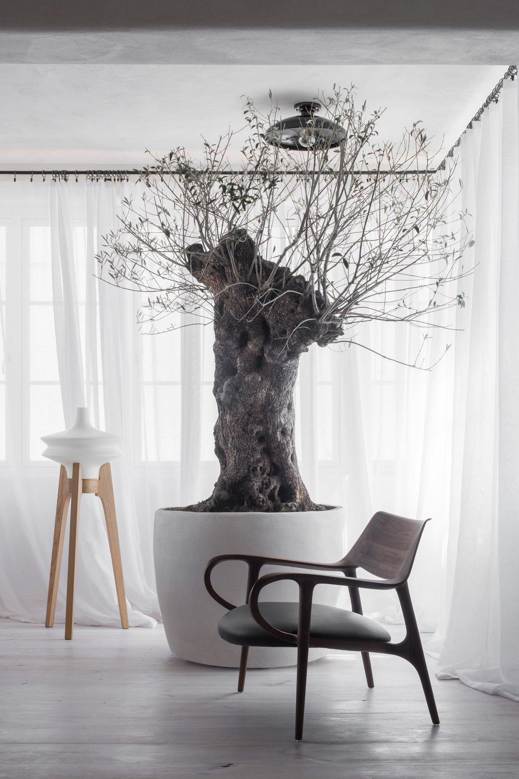 Loft Kolasiński veranda with olive tree
