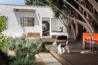 Wire fox terrier on guard at the raised wood deck and bedroom beyond