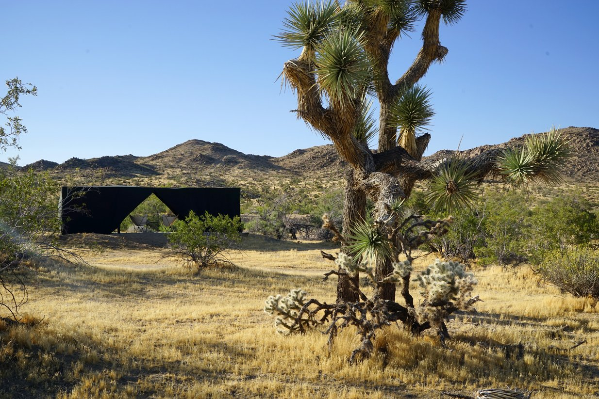 Outdoor, Desert, Trees, and Grass The Joshua Tree Case Study Cabin   Joshua Tree Case Study Cabin by Mike Vensel