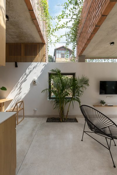 """Plantings were strategically placed throughout the living spaces to designate """"rooms"""" without using traditional walls."""