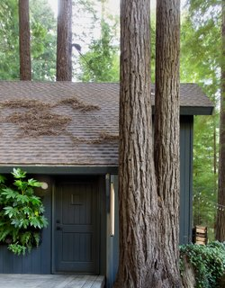 The cabin's redwood siding is painted a custom Sherwin-Williams black with green and blue undertones. The exterior face-lift also introduced additional plantings and rehabbed and extended the deck.