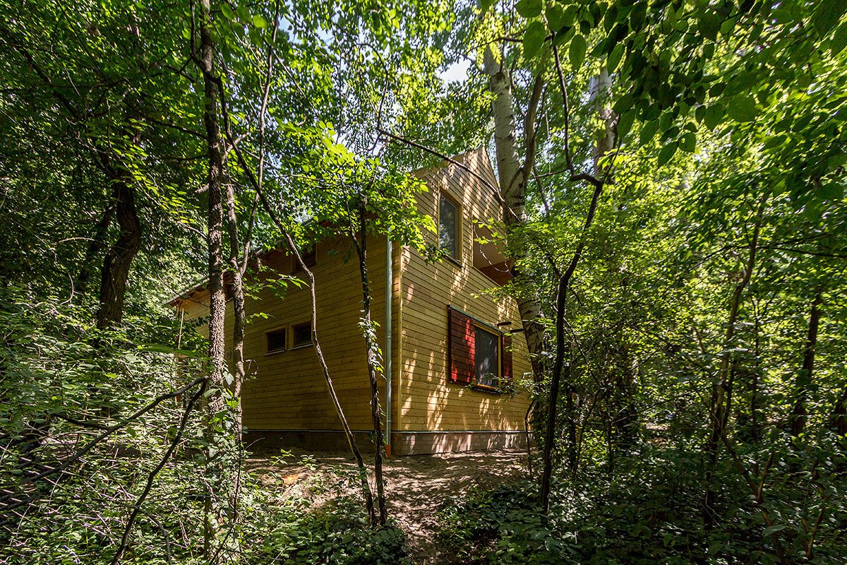 Trees, Back Yard, Exterior, Shingles Roof Material, House Building Type, and Wood Siding Material While looking out, you can only see dense forestry around the cabin, neighboring summer getaways are just a stone's throw away from each other in this holiday community  A Family Affair by Studio Bunyik