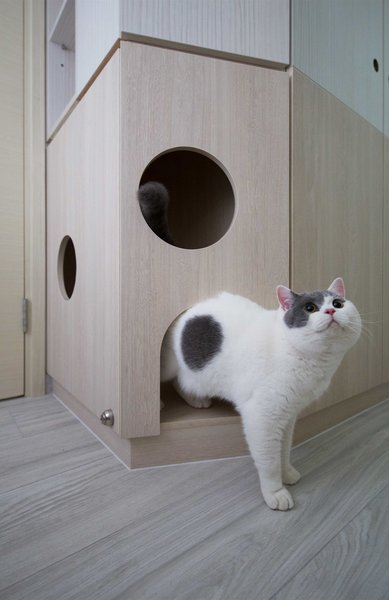 The resident kitty exiting the cat house in the mother's room.