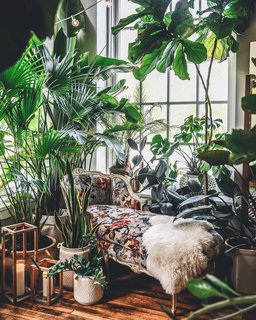 Hilton Carter's home in Baltimore home boasts over 300 plants.