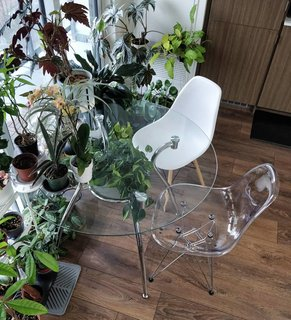 Simple furniture of glass and acrylic allows plants to shine.