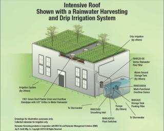 Intensive roof