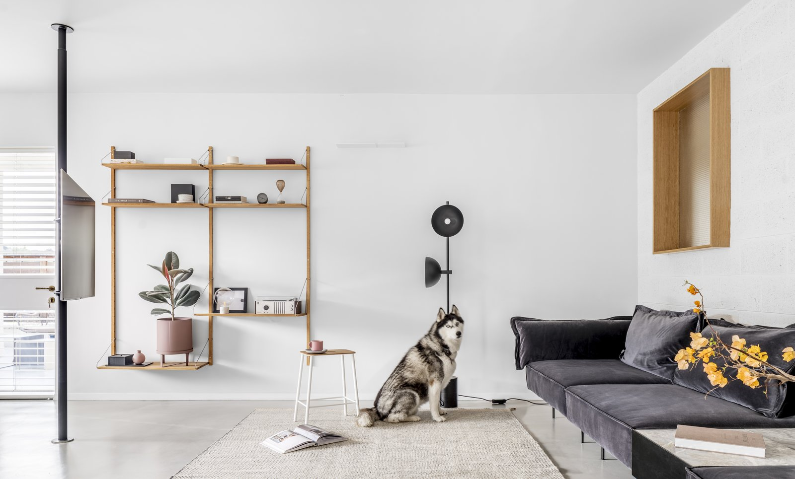 M Apartment minimalist living room with dog