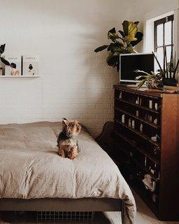 Natasha and Brett's little dog, Pinecone, sits on their cozy duvet.