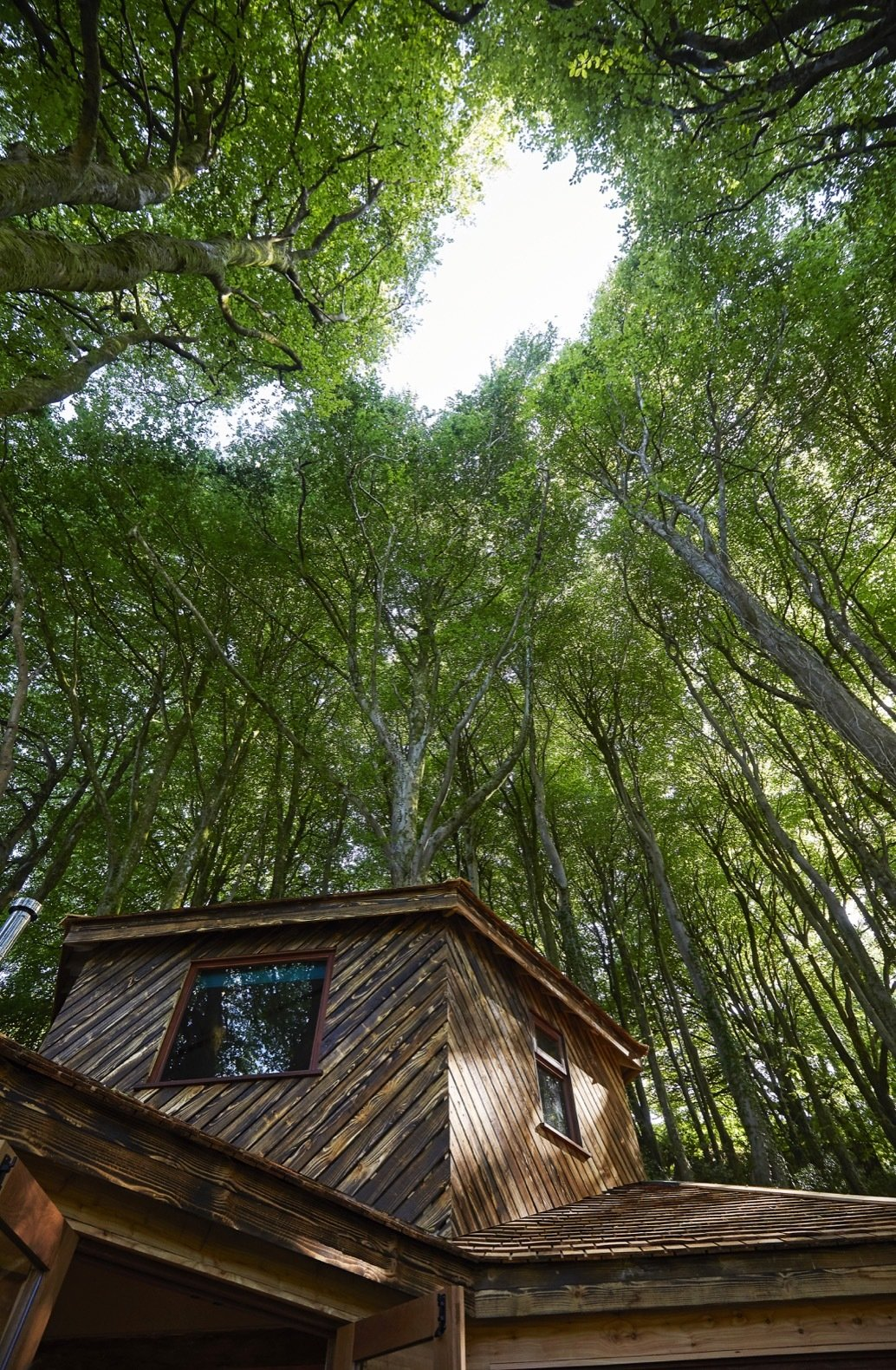 Outdoor, Trees, Woodland, and Wood Fences, Wall Located in the picturesque village of Lee near Ilfracombe, this serene getaway not only sleeps two, but is also dog-friendly.  Ravendere Retreats from A Luxe, Handcrafted Tree House Offers Blissful Escape Into Nature