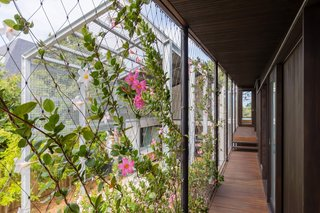 Flowering vines provide seasonal nuance and will form a lush living corridor over time.