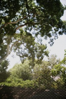 A view of the immense fig tree on the west side of the site through the perforated bronze screen.