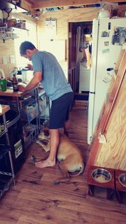 Josh in the kitchen with one of their dogs. Adherence to a strict build budget meant foregoing paint finishes.