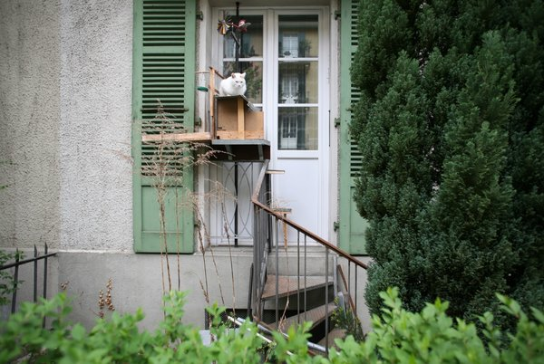 This cat ladder culminates in a shelter for the cat.