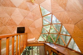Glazing lets in natural light and views of the tree canopy.