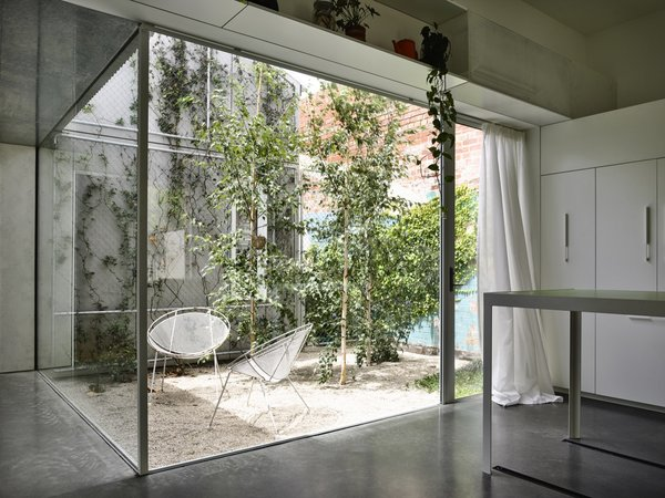 Planted with silver birch trees, a light-filled courtyard creates a visual and physical separation between the old building and new addition.