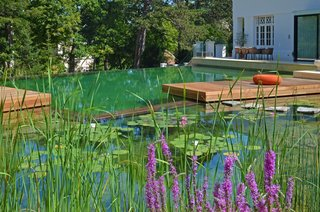 Austria–based natural pool pioneer BIOTOP has created natural swimming pools around the world for the past three decades. Pictured is one of their case studies: A spacious natural pool in a Vienna suburb with over 2,000 square feet of swimming space, floating lily pads, and stepping stones.