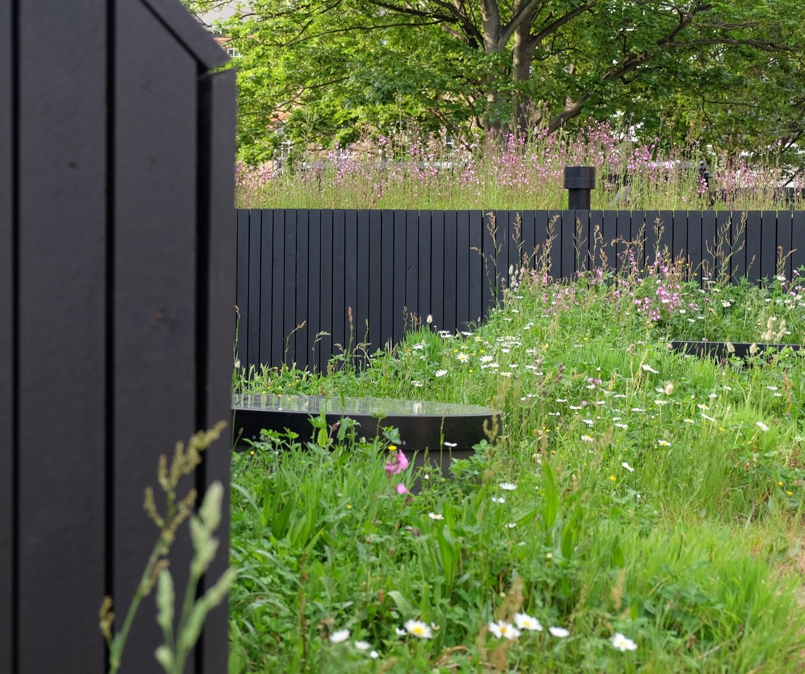 This Matte Black London Home Is Topped With a Wildflower Meadow