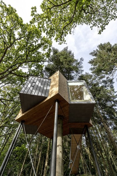 A tree grows through the center of the cabin, which is elevated 26 feet in the air and supported by thin metal pillars.