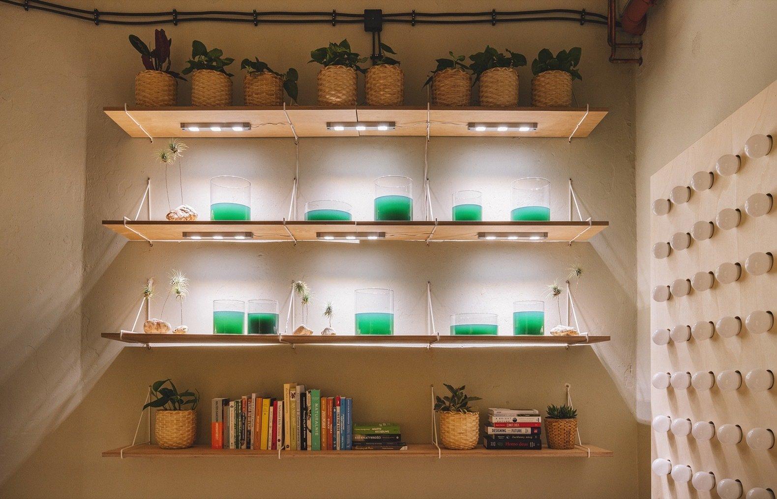IKEA Home of Tomorrow spirulina farm