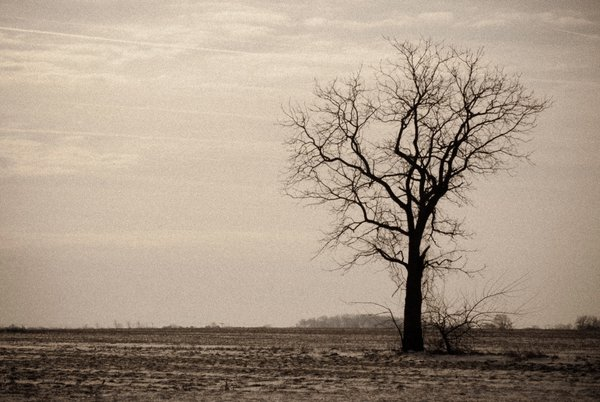 About the Rural Landscape Photograph:  Lonely Tree is a landscape photograph that was created in a barren field of Middletown, Delaware. Photograph was aged and a grain effect was added using Photoshop.  Title: Lonely Tree Landscape Photographer: Melissa Fague Genre: Landscape Photography Item ID#: LAND-0107  This landscape photograph is one of many available for purchase through www.pipafineart.com. You have your chose of size and print materials. All of our landscape pictures are printed on high quality materials and the highest quality ink for longevity. Each photo print is also coated with a soft luster finish. If you need assistance we are always available; please contact us with any questions.