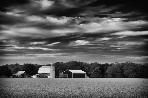 About the Rural Landscape Photograph:  Red Barn in Golden Field is a black and white landscape photograph of a beautiful red barn in the center of a golden field of dried crops. This photograph was created in Middletown Delaware in the early morning hours of the fall season. This image is also available in Color, a Vintage Black and White and Colorized version.  Title: Red Barn in Golden Field Black and White Landscape Photographer: Melissa Fague Genre: Landscape Photography Item ID#: LAND-0020-BW  This landscape photograph is one of many available for purchase through www.pipafineart.com. You have your chose of size and print materials. All of our landscape pictures are printed on high quality materials and the highest quality ink for longevity. Each photo print is also coated with a soft luster finish. If you need assistance we are always available; please contact us with any questions.
