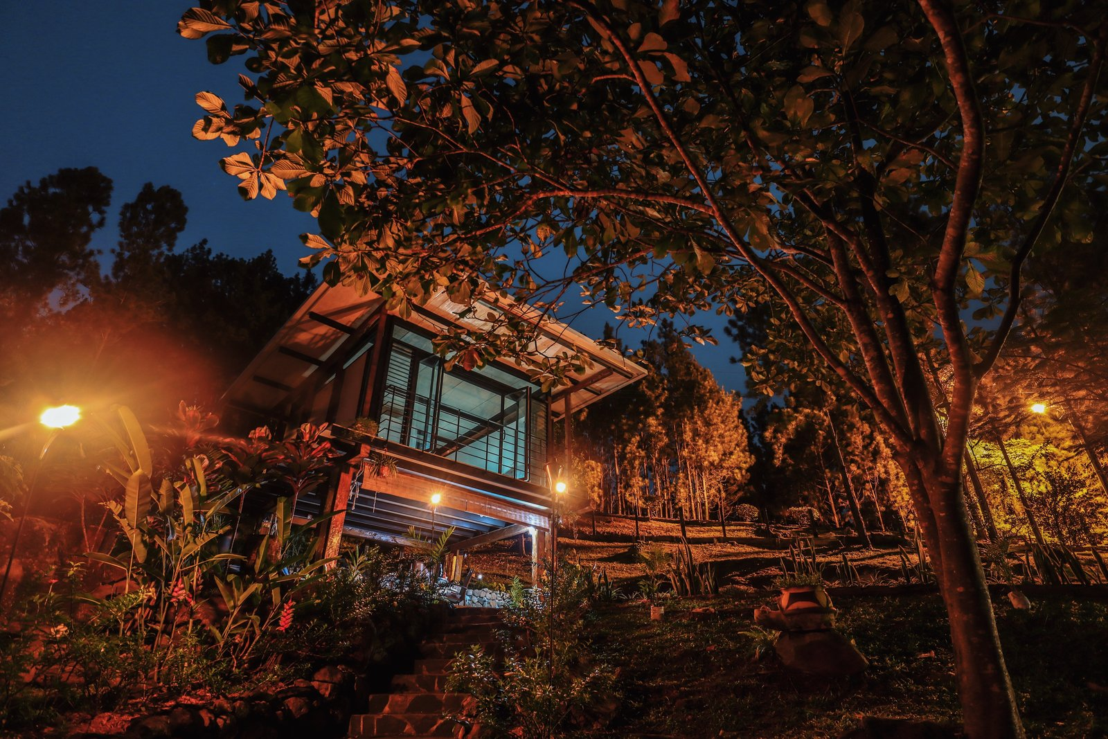 """Outdoor, Trees, Landscape Lighting, and Garden Night view  Search """"landscapes--trees"""" from Cabin 192"""