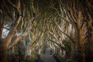 The Dark Hedges, an iconic bevy of beech trees located in County Antrim, Northern Ireland.