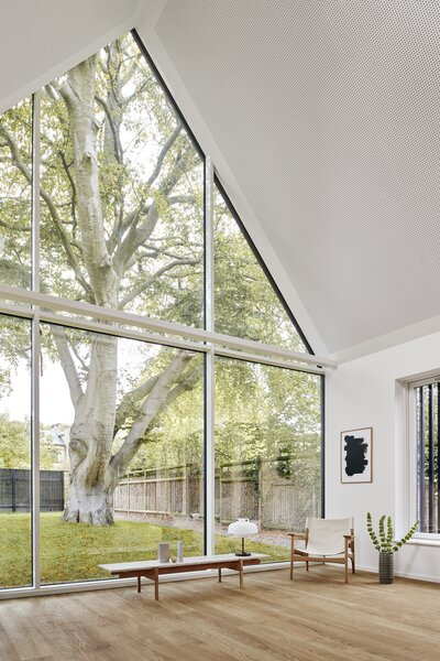 The living area is intentionally spare to accentuate the presence of the mammoth beech tree.
