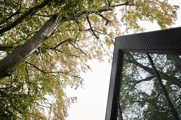 Full-length glazing creates an extended dialogue with the property's stand-out beech tree.