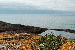 Coastal rocks on the Lake Superior coastline behind the cottage.