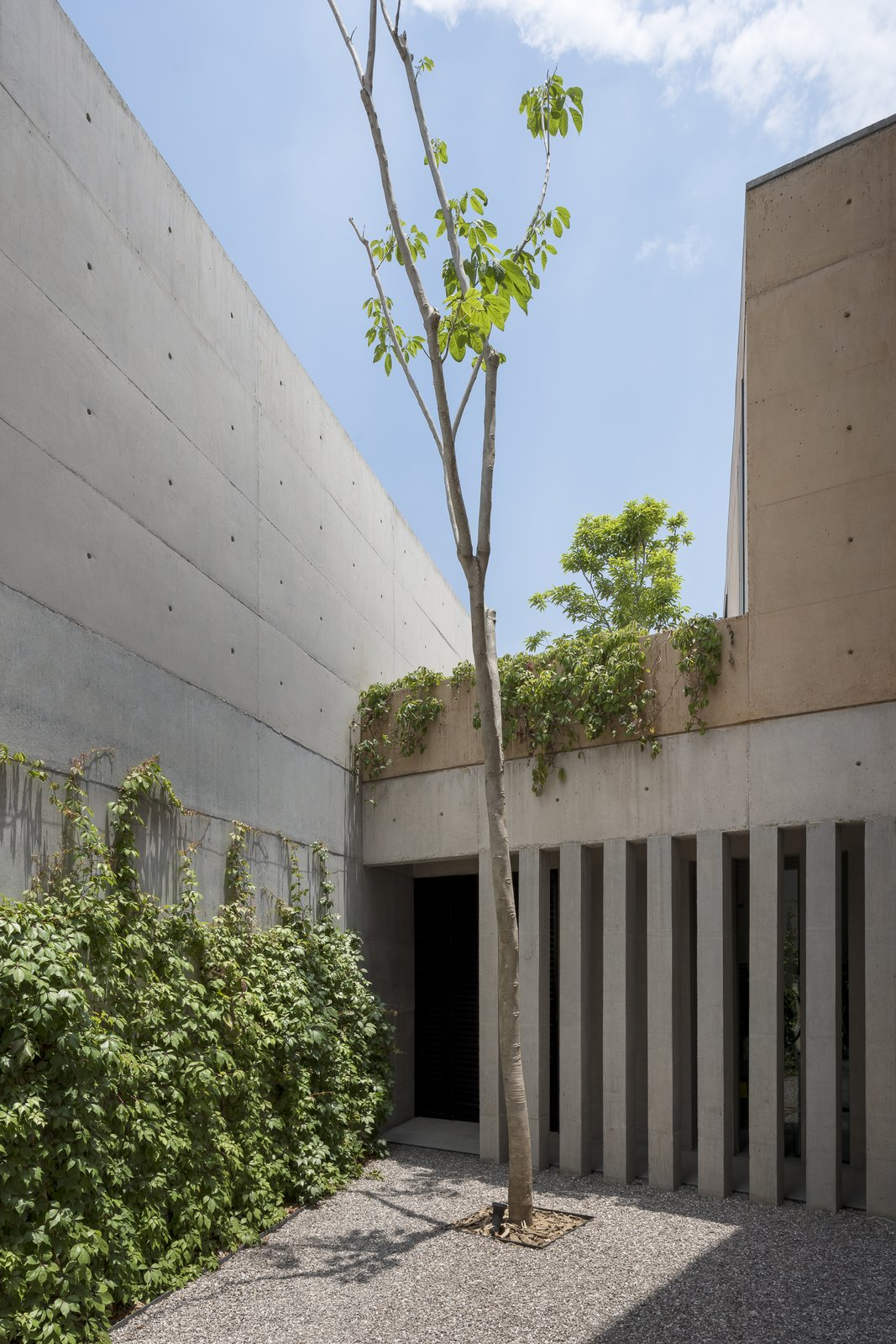 Outdoor, Trees, Concrete Patio, Porch, Deck, and Garden contrast between grey concrete and earthy-colored concrete.  Casa Moulat by CCA | Centro de Colaboración Arquitectónica
