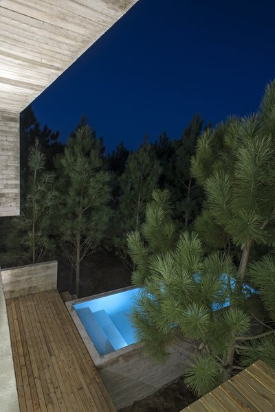 The house's elevation brings it into the canopy of the surrounding trees.