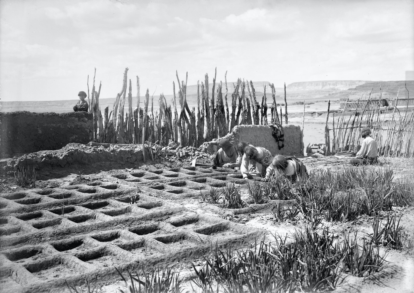 Waffle gardens at Zuni Pueblo in New Mexico circa 1910-1925. Waffle gardens are sunken plots with hard, hand-built adobe-like walls that catch and hold water close to plant roots for extended periods. This method—which offers wind protection and temperature control, while limiting evaporation and erosion—was developed at the neighborhood scale to ensure harvests, while combating the unpredictable water availability and inadequate soil quality that are common to desert environments.  Photo 5 of 8 in We May Already Have the Technology to Survive a Climate Crisis—We've Just Been Ignoring It