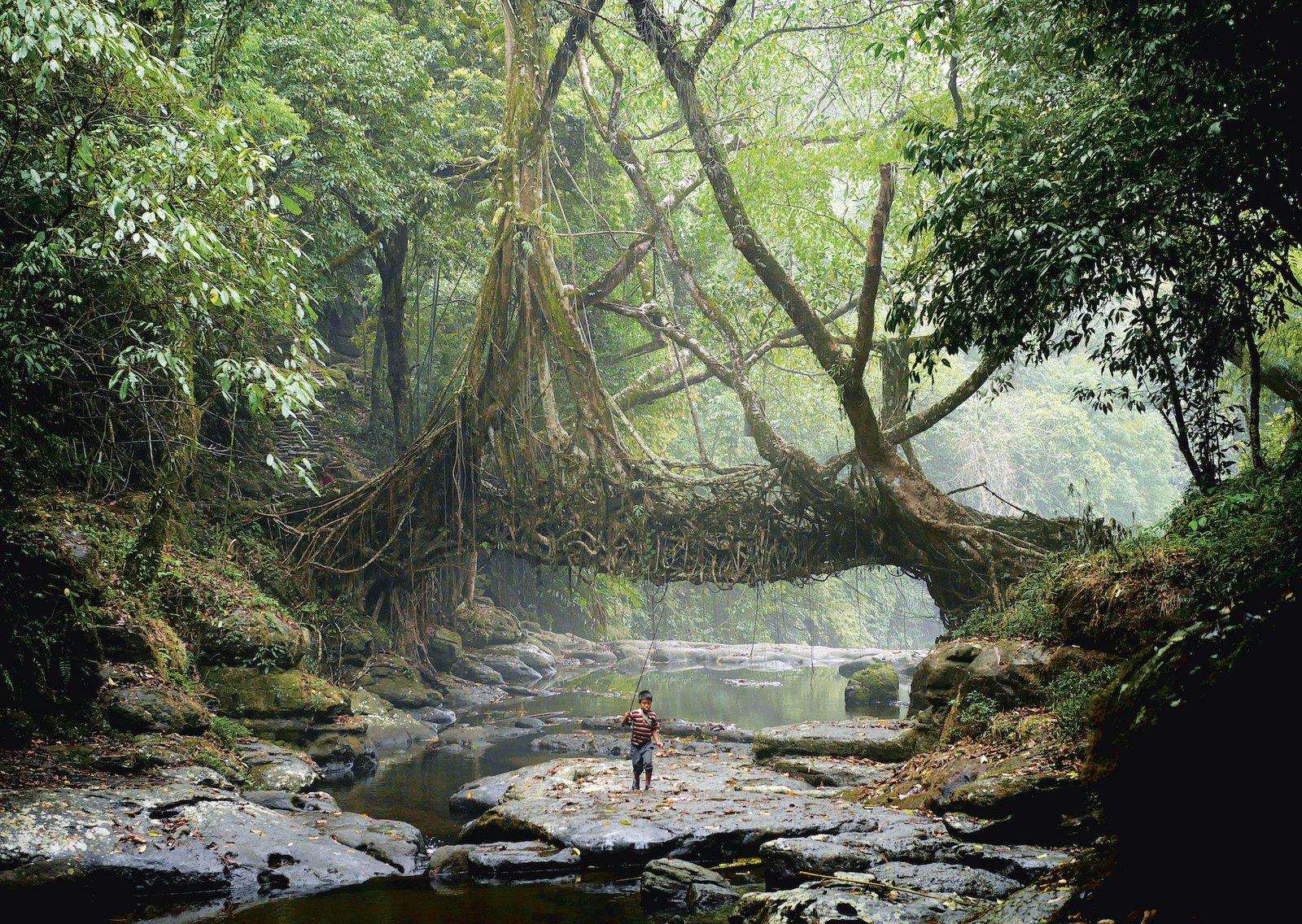 """jingkieng dieng jri or """"rubber tree bridge"""""""