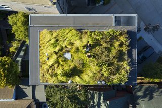 The living roof is planted with a combination of natural grasses and succulents. From the roof, there is a panoramic view over San Francisco to the East Bay. To the west is the instantly recognizable Sutro Tower.