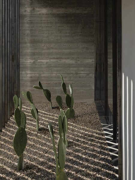 A cactus garden planted in between the glazed wall in front of the stair and the brise-soleil connects the home to the landscape.