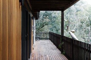 The new blackbutt timber deck is designed for entertaining, al fresco dining, and enjoying views of the garden and surrounding bushland. It features a large dining table, a hanging egg chair, and a barbecue.