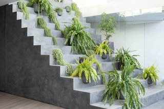 The steps can be easily accessed from the first floor, where the client's mother keeps potted plants.