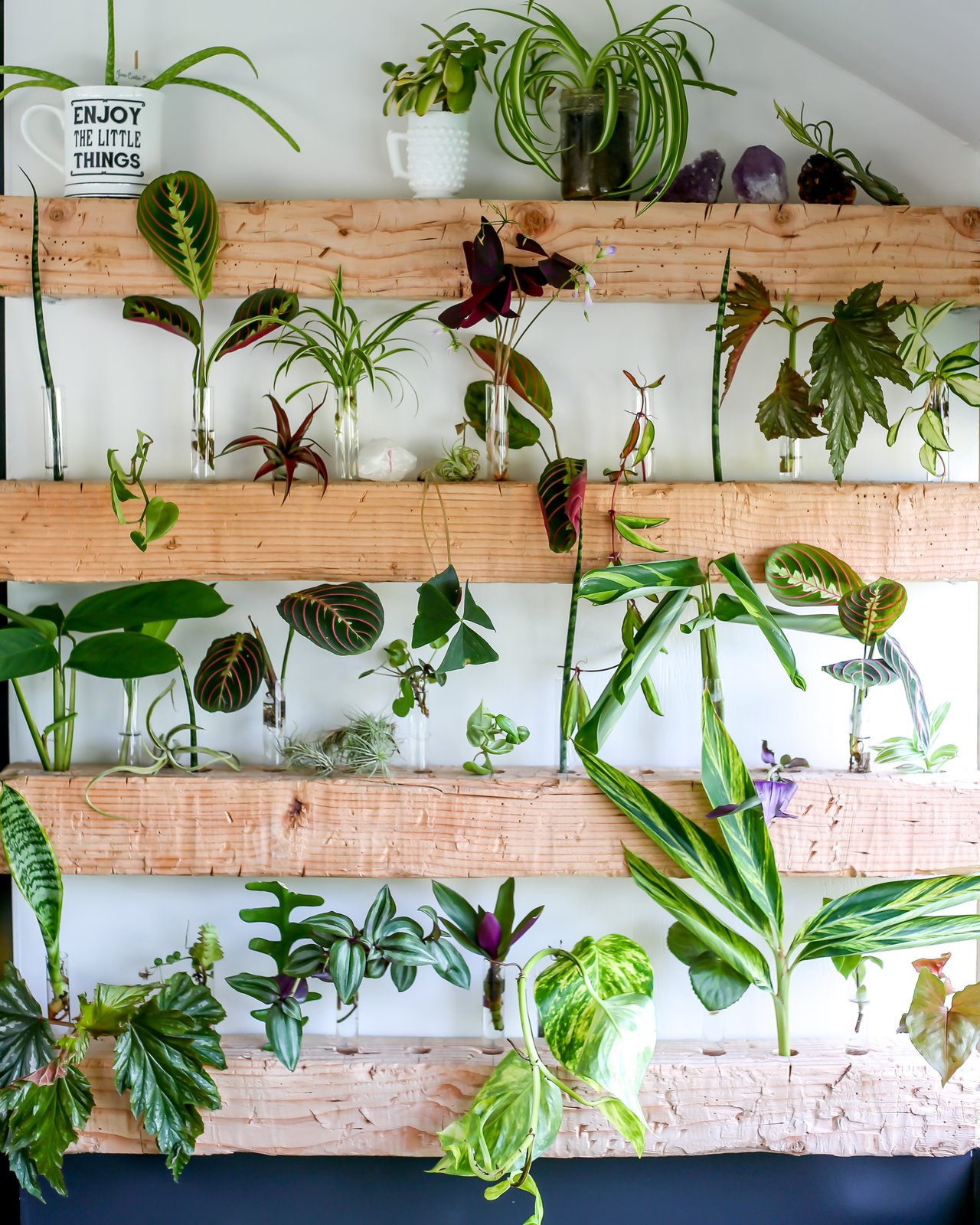 Living Room and Shelves The propagation wall is always changing and brings so much life to the space  Big Booty Judy- Our Home on Wheels