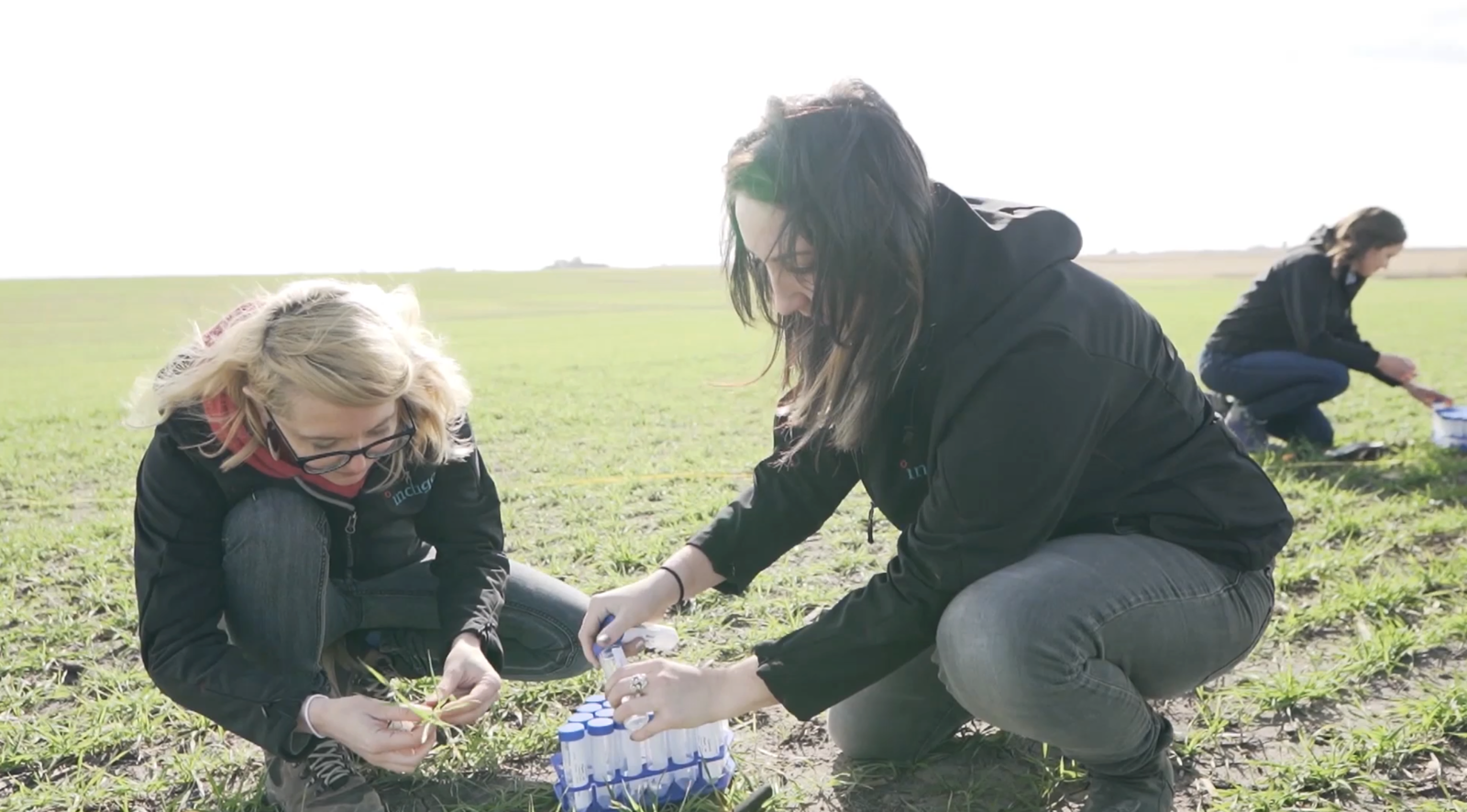 Indigo scientists collect plants from a wheat field to identify microbes living within them. The scientists' goal is to understand how microbes impact the plants' nutrient use efficiency.  Photo 4 of 6 in How Will the Coronavirus Pandemic Change the Way We Eat?