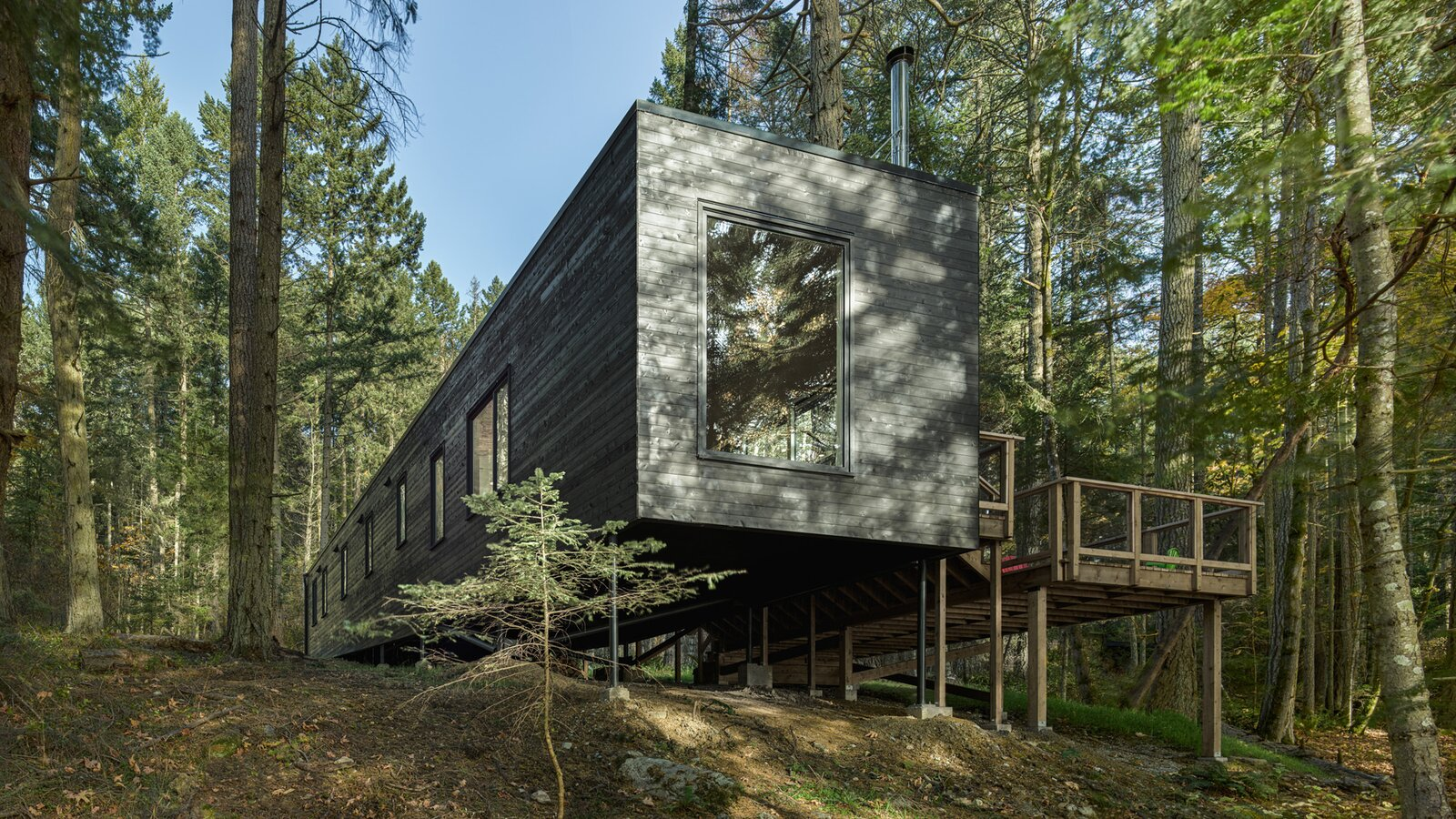 Forest Cabin exterior by Helen Pang Architecture