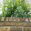 Front Entrance with Bamboo landscaping and London Stock Brick wall Photo 16 of Studio Cottage modern home