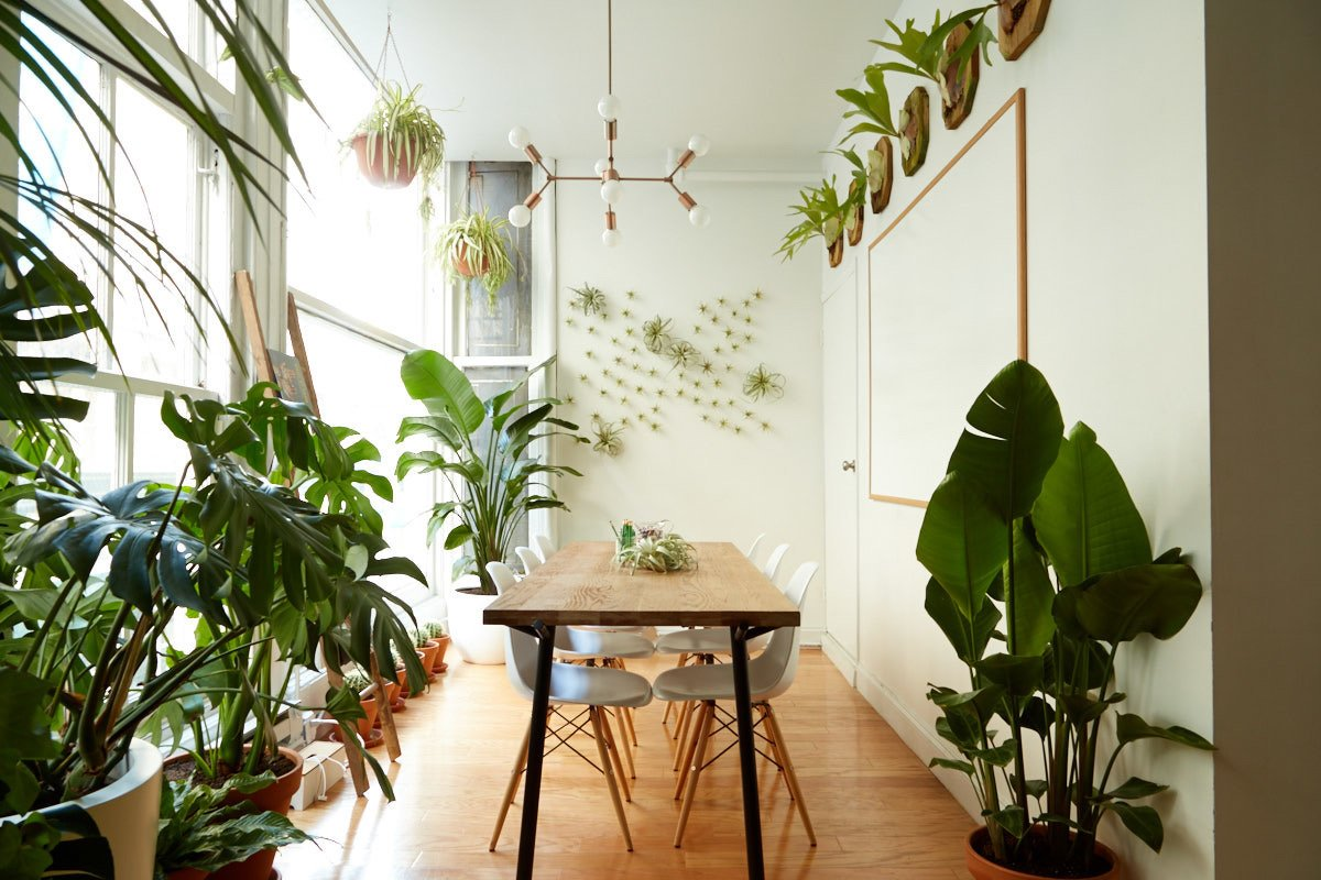 5 Houseplants You Can't Kill