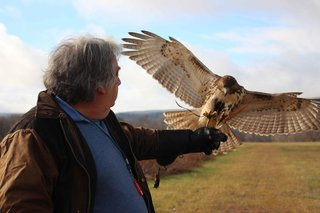 Shope—a licensed falconer—captures, trains, then releases one red-tailed hawk each year.