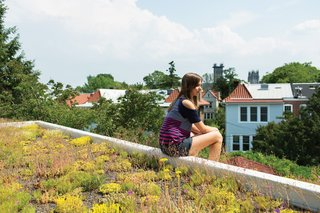 Eliza takes in the view from her perch atop the house's green roof, which Daniel believes to be the first of its kind in the neighborhood. The family received a subsidy administered by DC Greenworks and funded by the DC Department of the Environment.