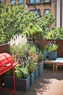 Large container plants add a flourish of greenery in a small outdoor space.