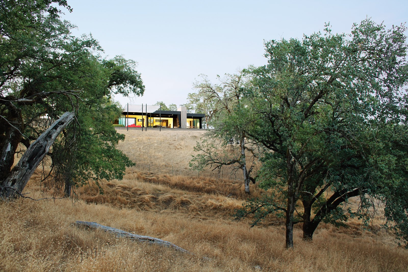 """Though the Burtons are landscape architects, they took an intentionally hands-off approach to their own land, which is part of the 1,800-acre Long Valley Ranch, a former cattle ranch. """"We made very few moves, beyond planting fifty olive trees and some native shrubs and grasses,"""" says Bill. """"We wanted nothing in the landscape to be edible or pretty, nothing to attract animals to the house."""" Nevertheless, they've spotted plenty of fauna thanks to motion-activated """"trail cams"""" they use to spy on local wildlife. To date they've snapped photos of mountain lions, bobcats, wild pigs, and a bear.  Photo 7 of 8 in A Simple Plan"""