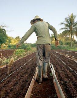 Havana: World Capital of Urban Farming? - Photo 3 of 8 -