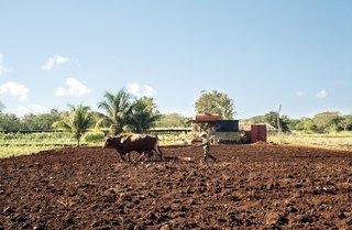 Havana: World Capital of Urban Farming? - Photo 6 of 8 -