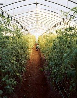 Havana: World Capital of Urban Farming? - Photo 7 of 8 -